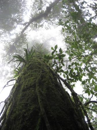 Fondo Verde del Clima financiará dos nuevos proyectos en Argentina y Guatemala
