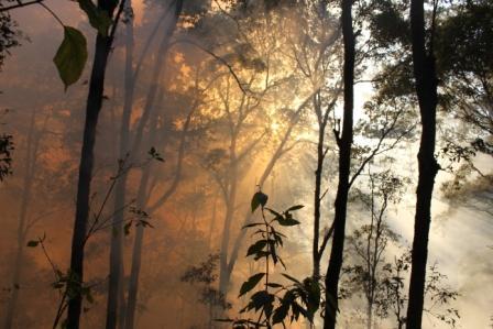 La deforestación se ralentiza a nivel mundial, con más bosques mejor gestionados