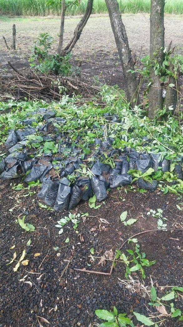 Destruyen árboles que serían utilizados para proyecto de reforestación