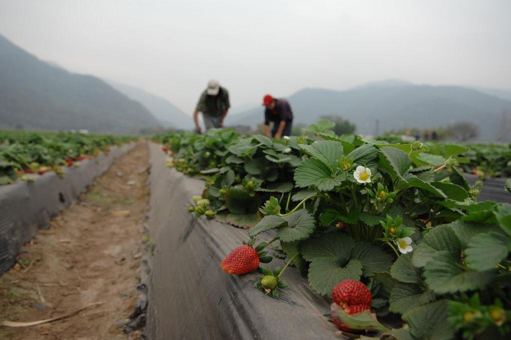 FIDA insta a América Latina a invertir en desarrollo agrícola para combatir la pobreza rural