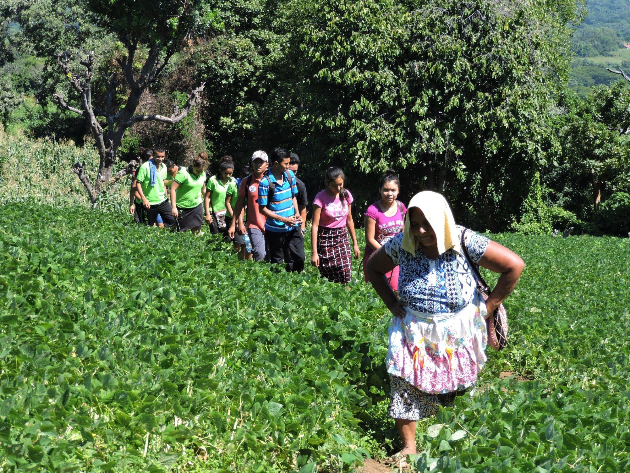 Reportan buena cosecha de frijol y maiz en San Miguel