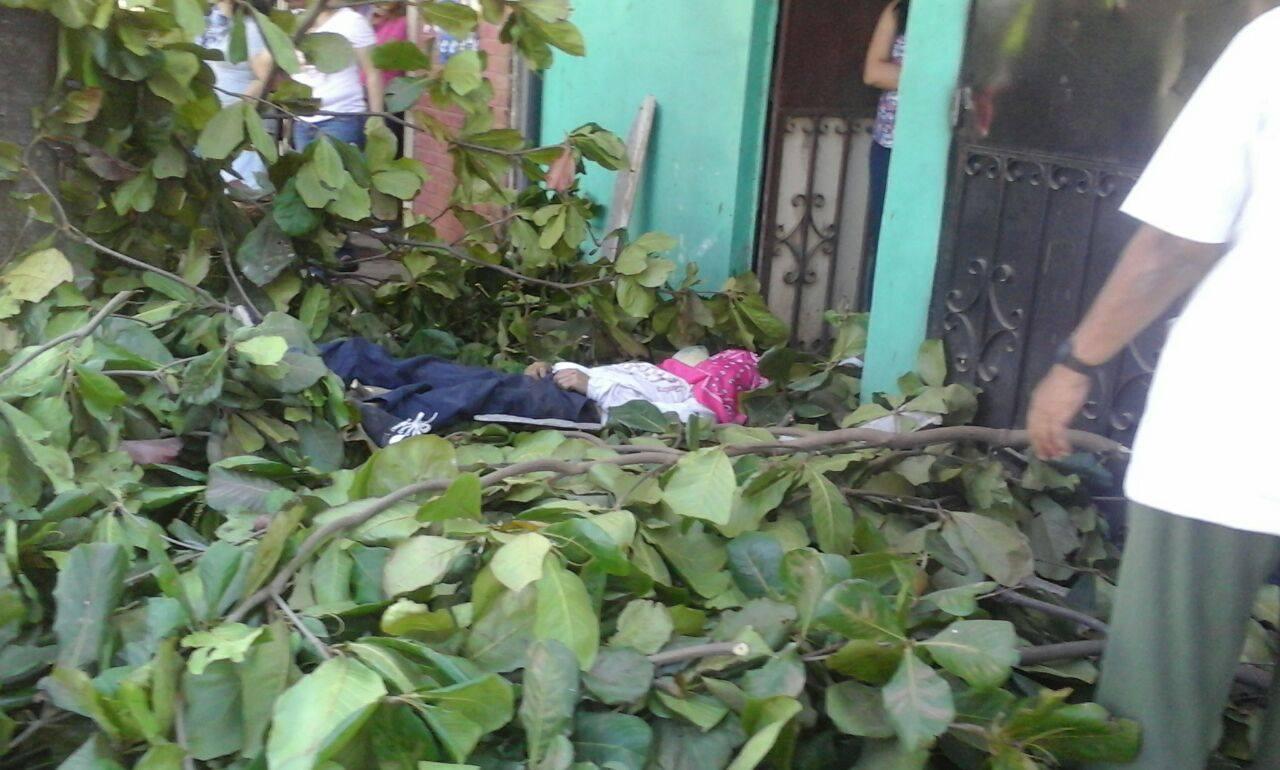 Hombre fallece cuando podaba un árbol