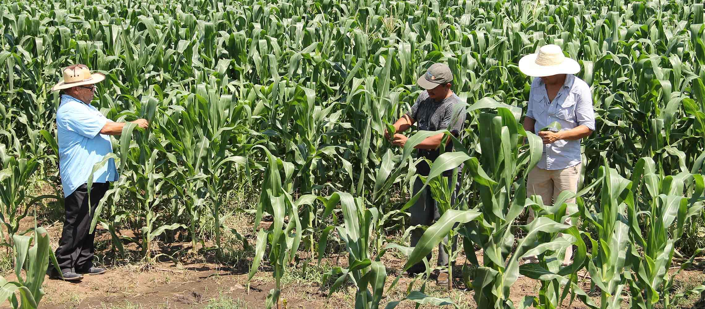Desde el dia de ayer lunes, el MAG comenzó a distribuir Paquetes Agrícolas en el Occidente de El territorio Salvadoreño