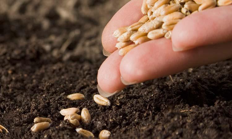 Nueva prorroga para tramitar certificación de plantas