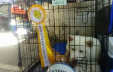 Dogs of all breeds participated in the Dog show 2017 - The Country 4