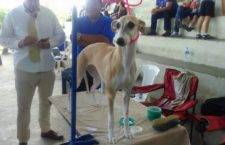 Dogs of all breeds participated in the Dog show 2017 - The Country 2
