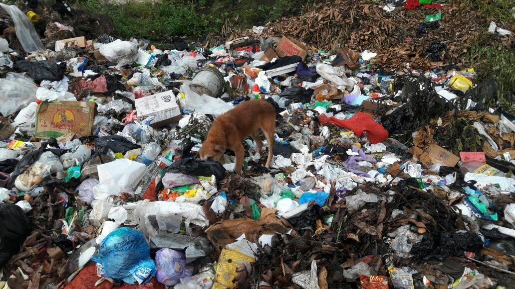 Vecinos se organizan para eliminar basureros a cielo abierto en cantón Natividad