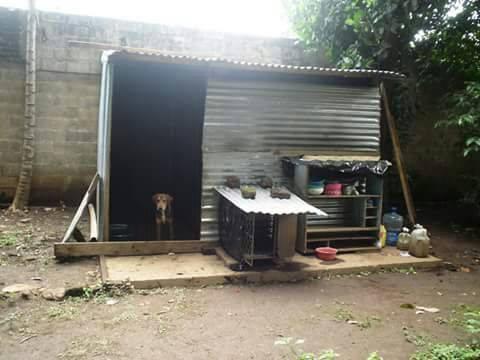 Refugio de perros santaneco necesita ayuda