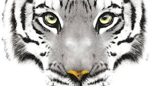 La oscura cueva del tigre