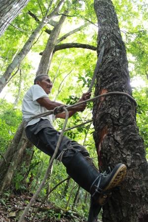 Se acaba el tiempo para los bosques: su superficie sigue reduciéndose