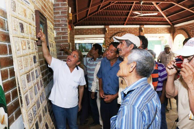 CENTA CAPACITA AL CONSEJO NACIONAL DE PUEBLOS ORIGINARIOS DE TACUBA SOBRE CONSERVACIÓN DE SEMILLA ANCESTRAL