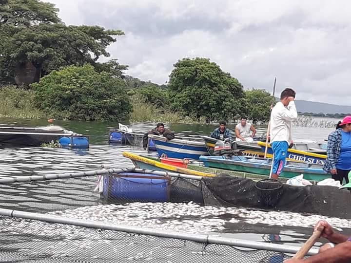 Muerte de miles de peces en el lago de Güija alerta a la población