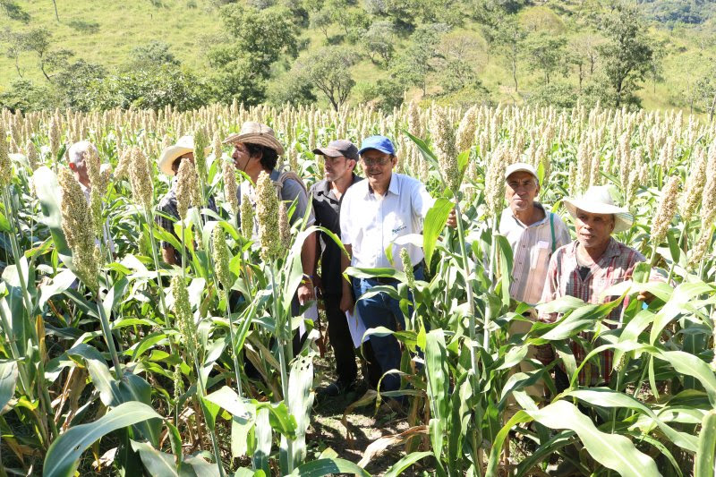 AGRICULTORES OBSERVAN PARCELAS DEL SORGO CENTA RCV Y CONOCEN LAS BONDADES DEL CULTIVO