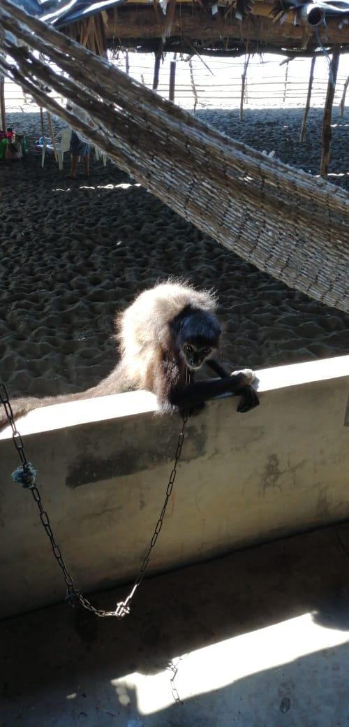 MARN y PNC decomisan animales en restaurante de Sonsonate