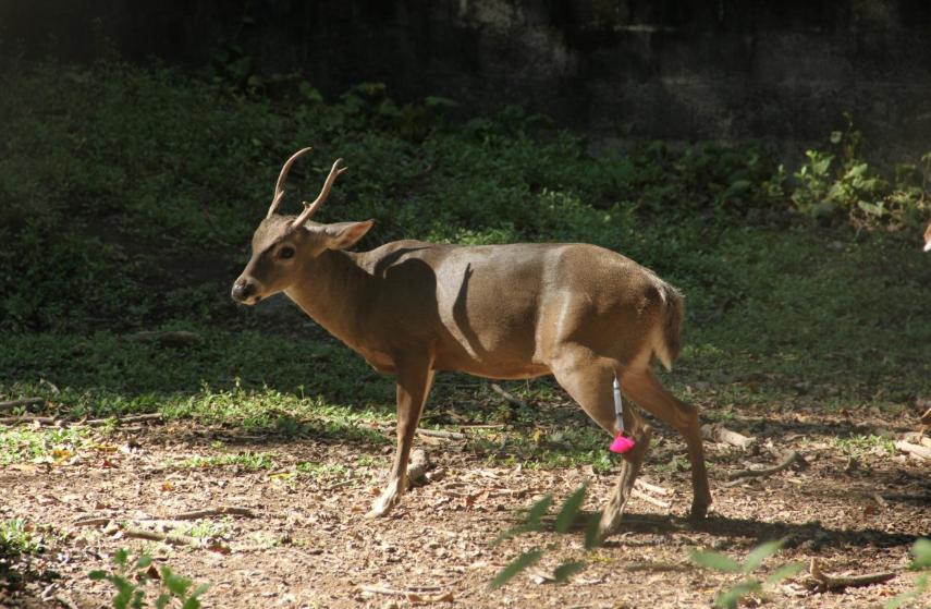 Nueve animales rescatados de ex parque recreativo en San Miguel