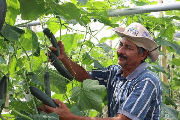 FAMILIAS PRODUCTORAS CUENTAN SU TRANSFORMACIÓN A 10 AÑOS DE ACOMPAÑAMIENTO TÉCNICO AGROPECUARIO