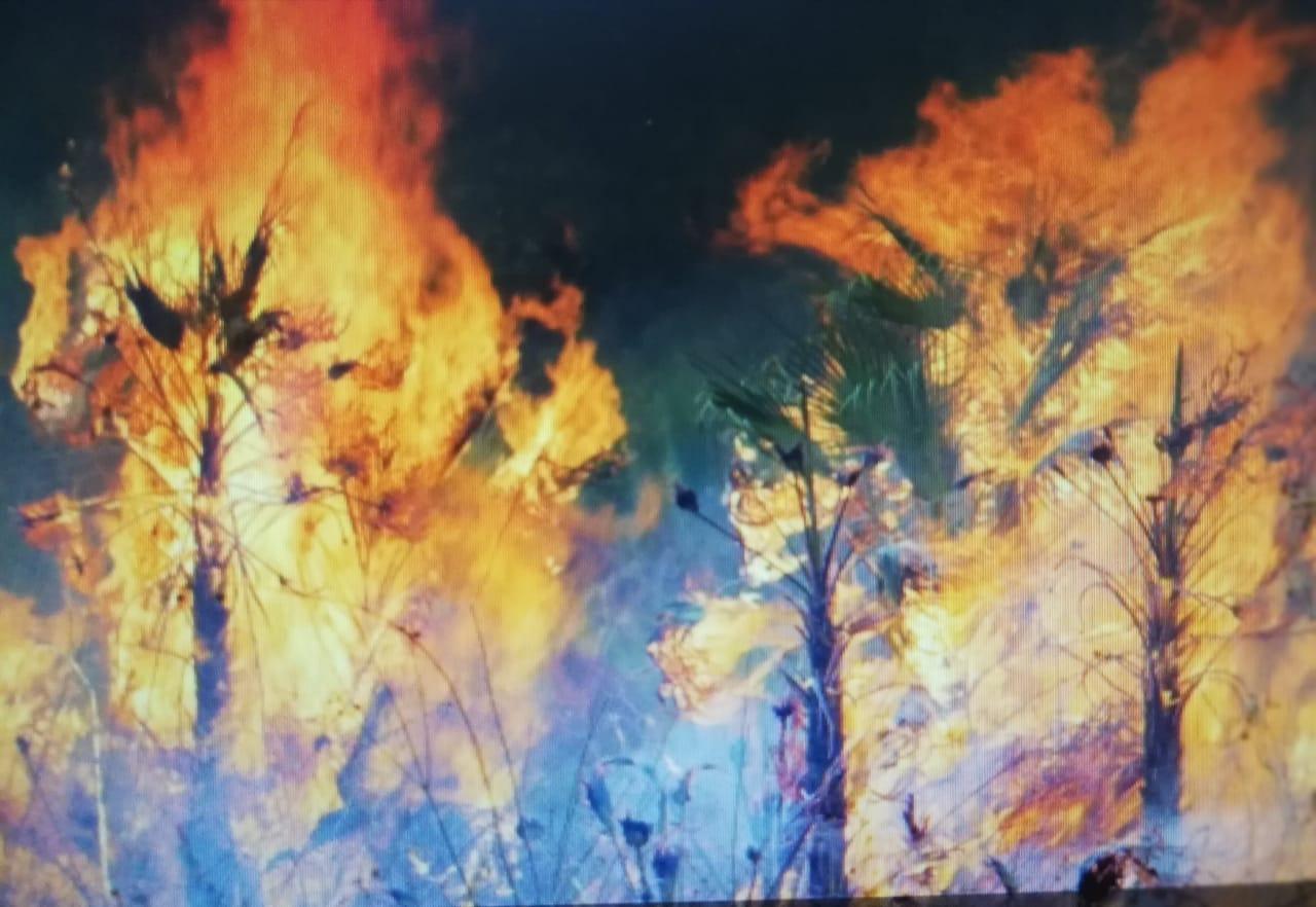 Los agricultores en Belice se alejan de la agricultura de tala y quema