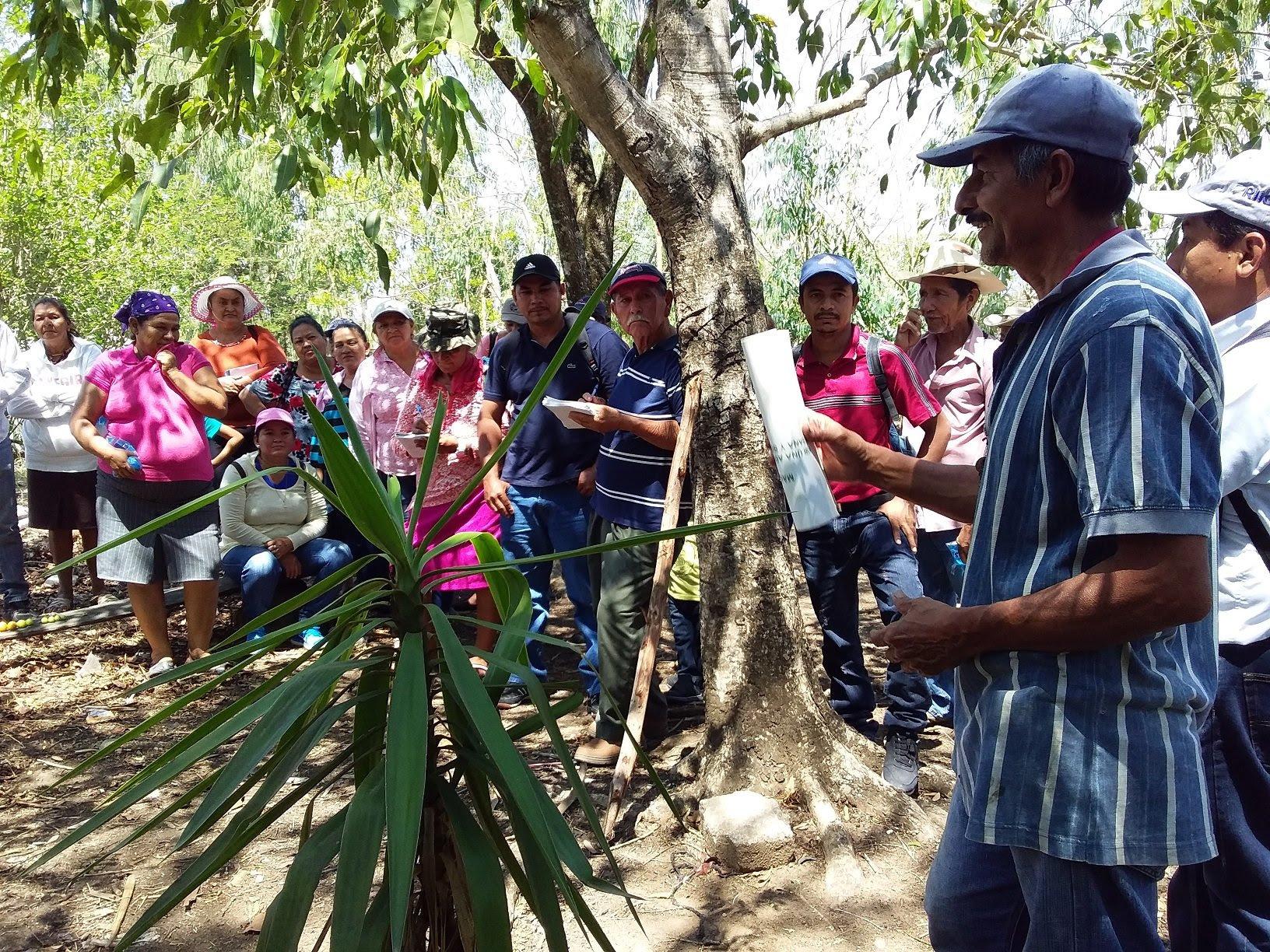 FAMILIAS PRODUCTORAS ATENDIDAS POR CENTA REALIZAN GIRA DE CAMPO PARA INTERCAMBIO DE CONOCIMIENTOS EN PRODUCCIÓN HORTÍCOLA