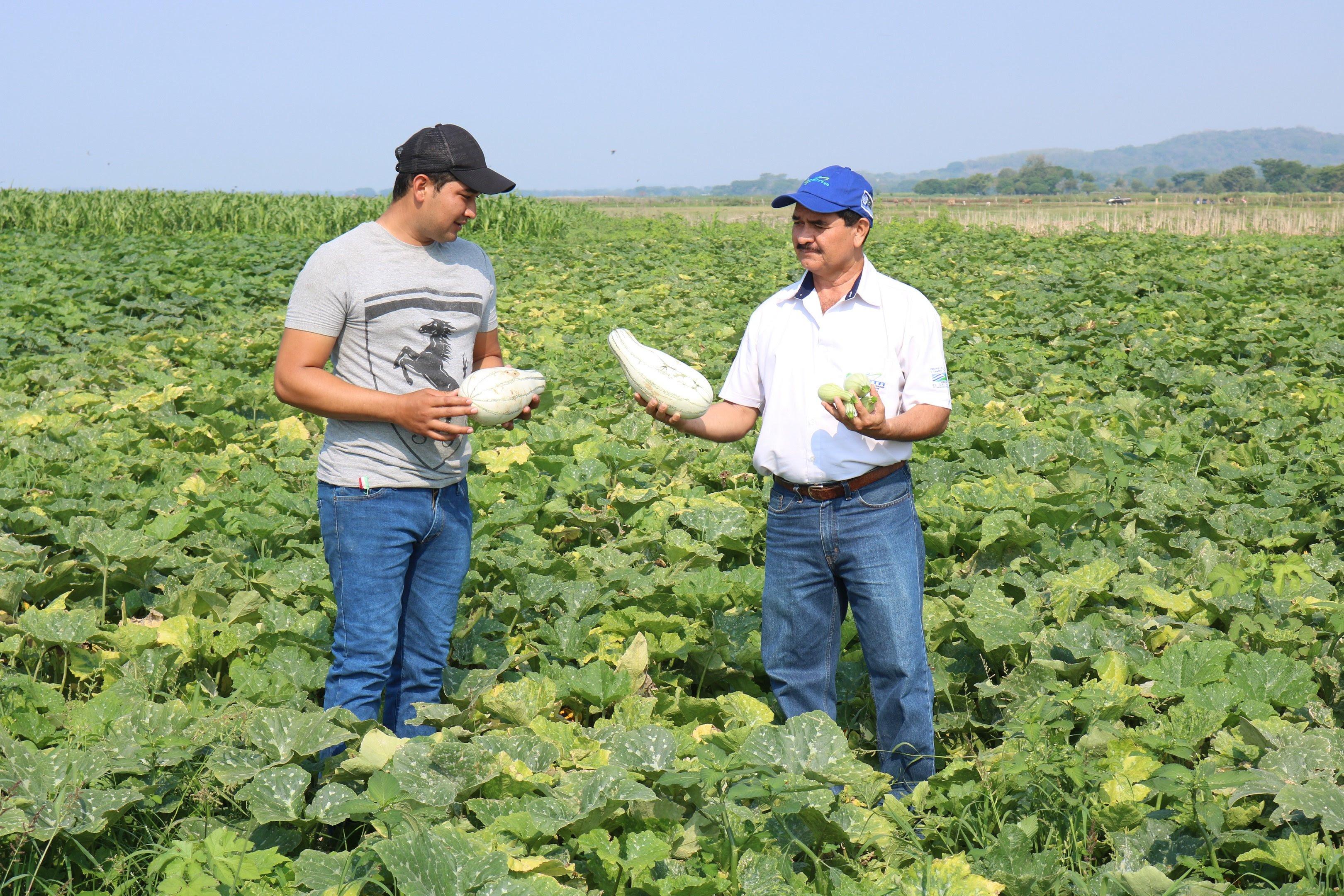 UN JOVEN ORGULLOSO DE TRABAJAR EN LA AGRICULTURA Y DE PRODUCIR SU PROPIA SEMILLA DE PIPIÁN