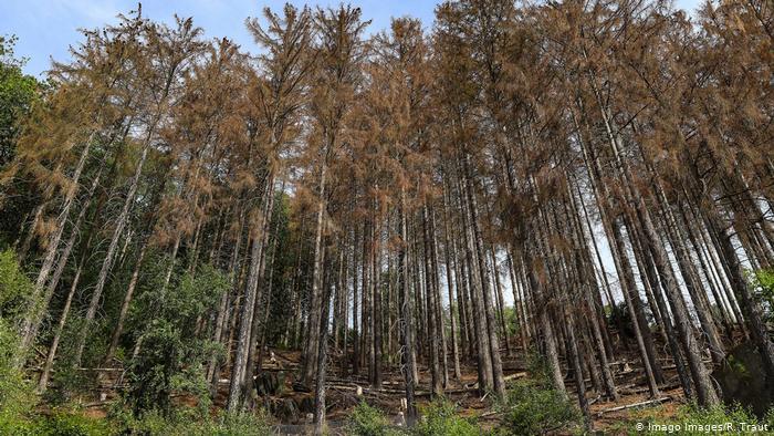 Países del SICA se comprometen a conservar y restaurar 10 millones de hectáreas para el año 2030 en Cumbre para la Acción por el Clima