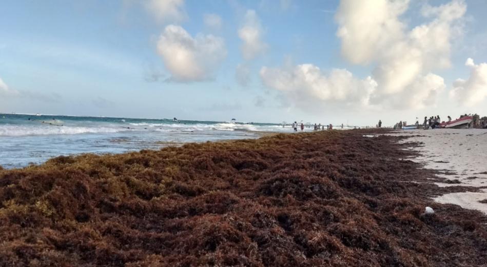 El Sargazo el alga amenaza el paraiso