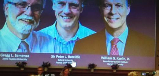 Trío gana Nobel de Medicina por estudios sobre cómo las células se adaptan al oxígeno