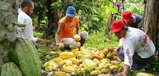 Los sistemas agroalimentarios deben estar al centro de la respuesta regional a la pandemia de COVID19