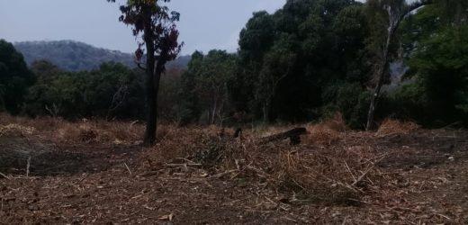 La tala de árboles no se detiene con la cuarentena
