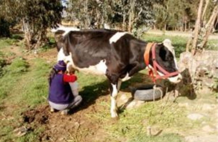 Se crea compensación temporal para pequeños productores de leche en Colombia