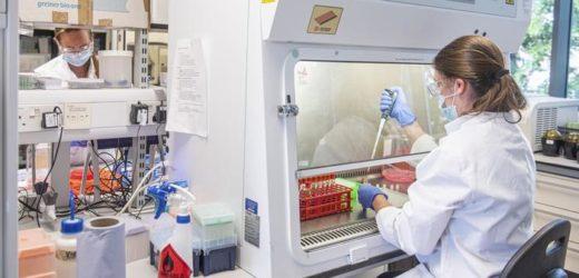 Dos vacunas contra coronavirus producen respuesta inmunitaria y son seguras