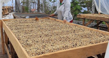 Familias productoras de café, multiplicadoras de la innovación
