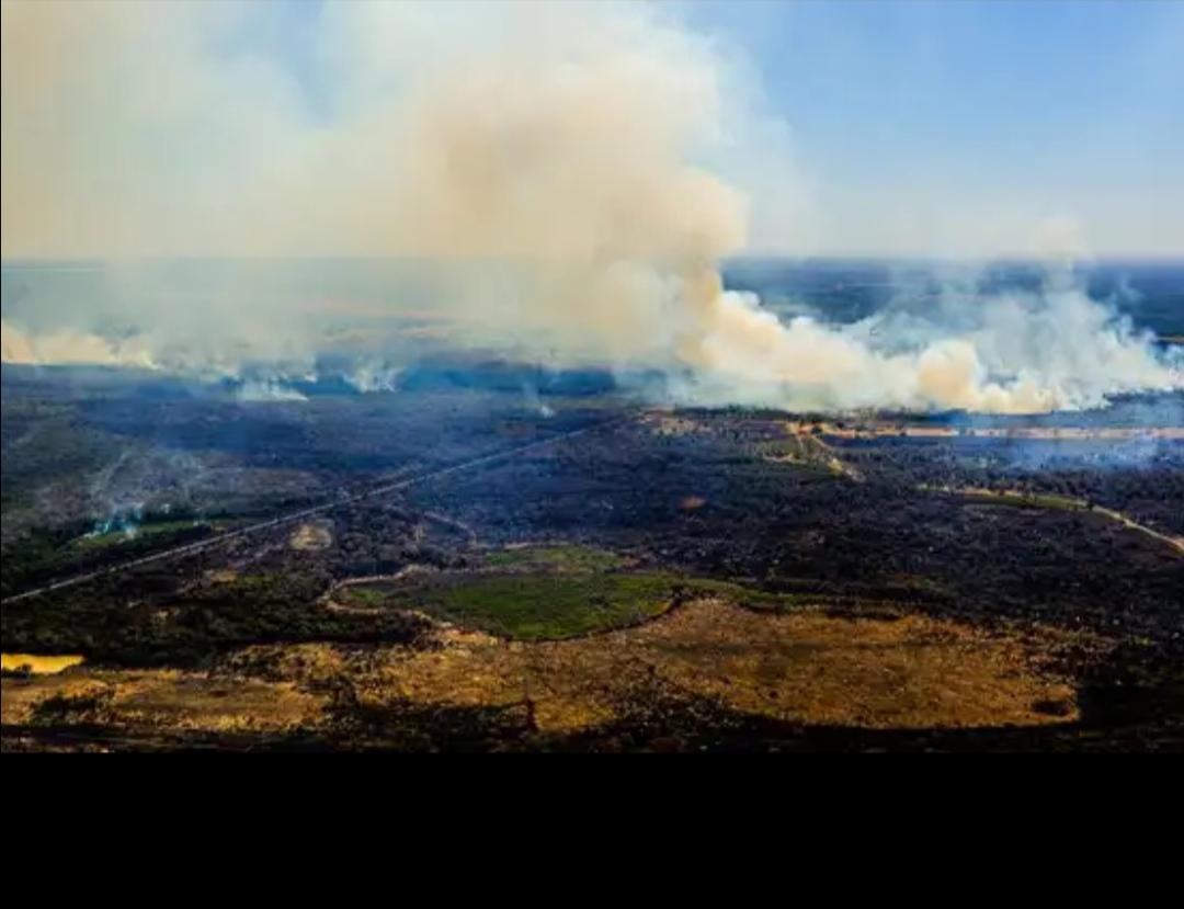 El Pantanal, el mayor humedal del mundo, se quema en Sudamérica