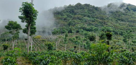 La Comisión Forestal para América Latina y el Caribe destacó el rol estratégico de los bosques regionales para mejorar los medios de vida, contrarrestar el cambio climático y detener la pérdida de la biodiversidad.