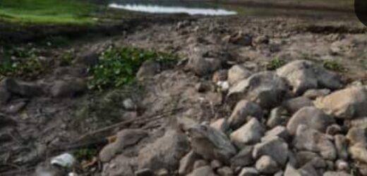 La ONU colaborará en la restauración de 295.000 hectáreas de áreas protegidas en Honduras